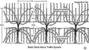 Vine trellis Scott Henry diagram