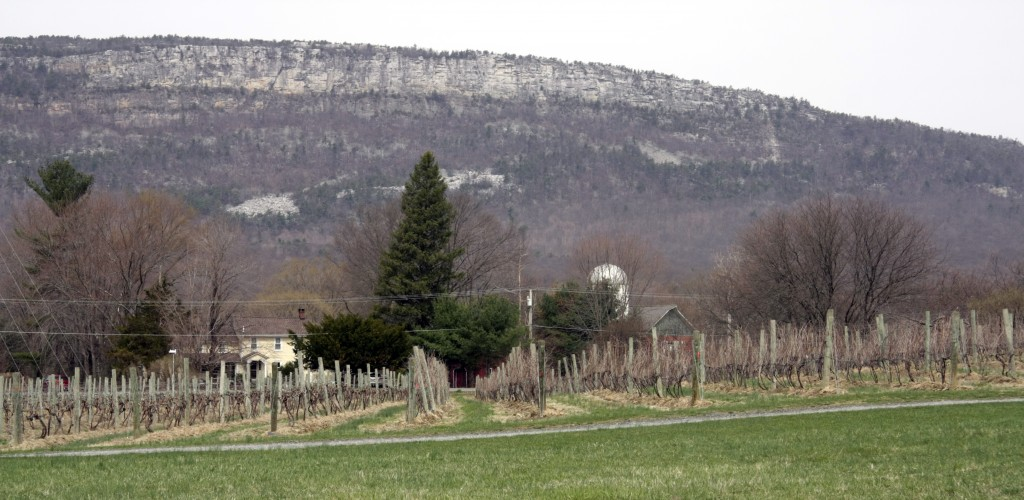 Whitecliff Vineyards, 11