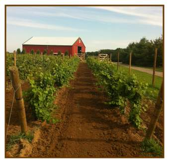Corwith Vineyard